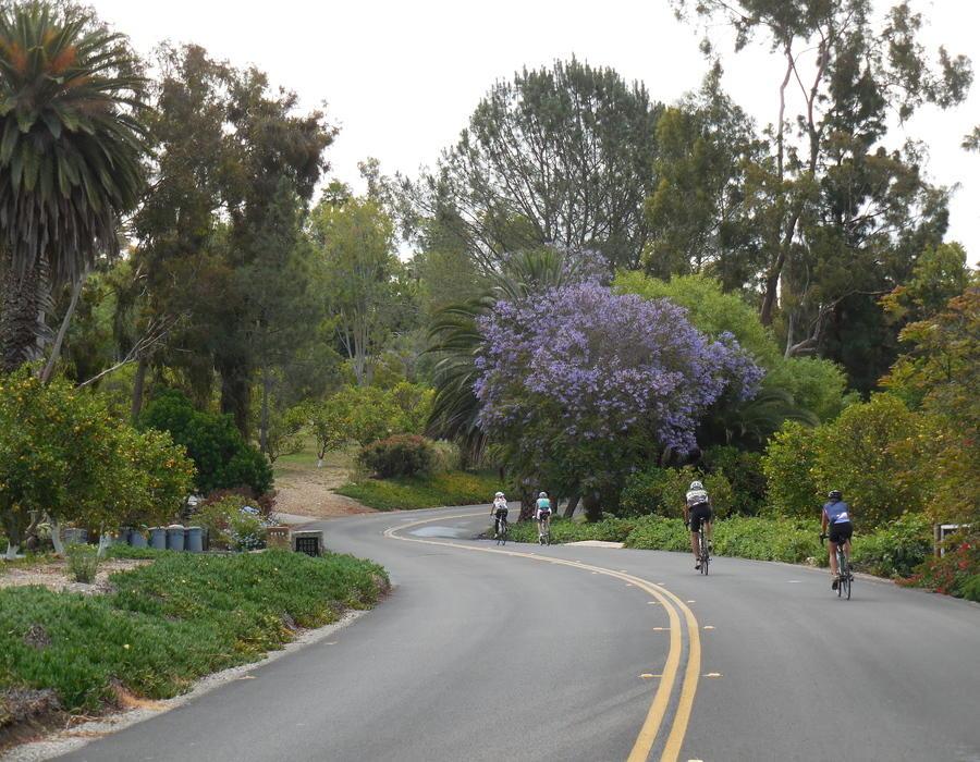 Barton Haynes Rancho Santa Fe Cycling